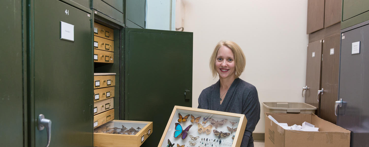 A female scientist holds several butterfly specimens.