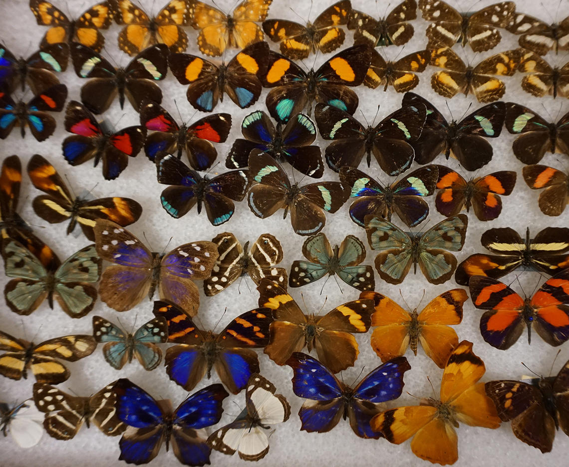 Click to view our Invertebrate Collection