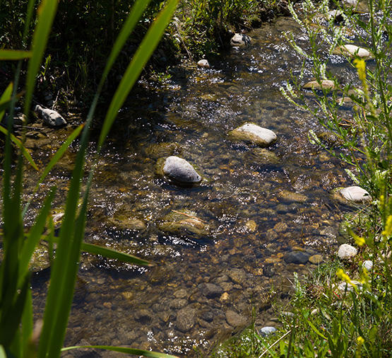 Shallow stream flowing over rocks, surrounded by greenery