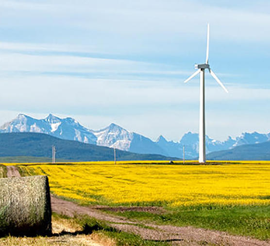 A wind turbine is shown in a canola field, with a hay bale in front and the Rocky Mountains in the background