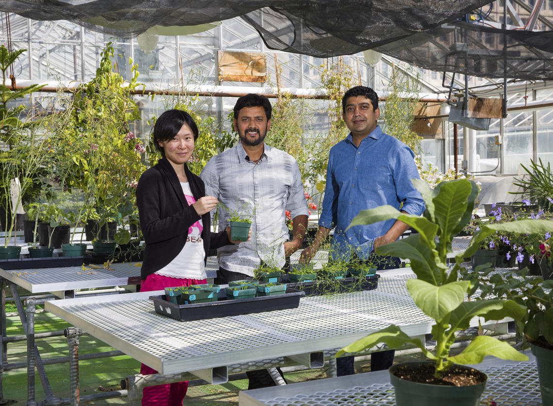 Three researchers in greenhouse surrounded by plants.