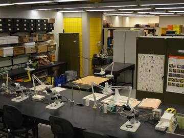 Student lab space (taxonomy) where plant specimens are studied and identified.
