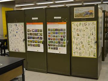 These four cabinets hold at least one specimen of every Alberta species (approximately 2000).
