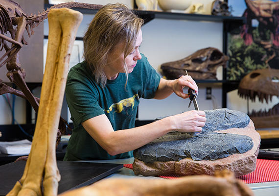 A woman measures a fossil.