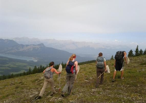 A group of students hike in the Alberta Rockies as part of the Bio Blitz event.