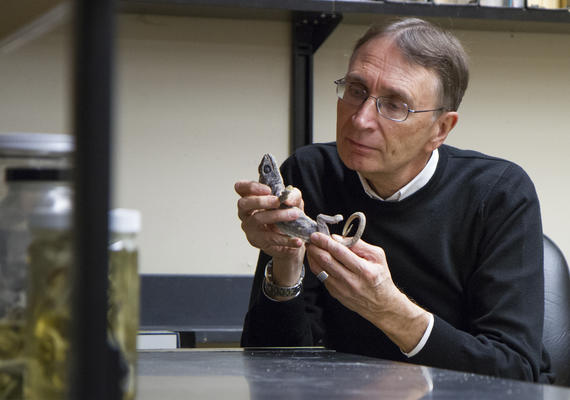 A male researcher examines a reptile.