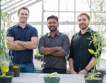 Researchers pictured with canola plants in Faculty of Science greenhouse